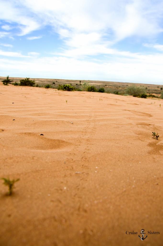 Spuren von Tieren im Sand in Marokko