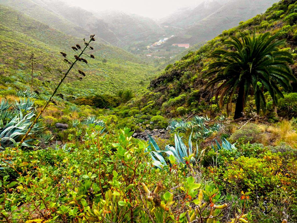 Flora La Gomera