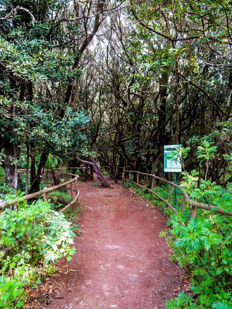 Naturlandschaft auf La Gomera mit Lorbeergewächsen