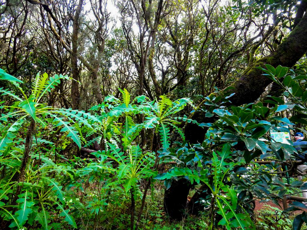 Naturlandschaft von La Gomera