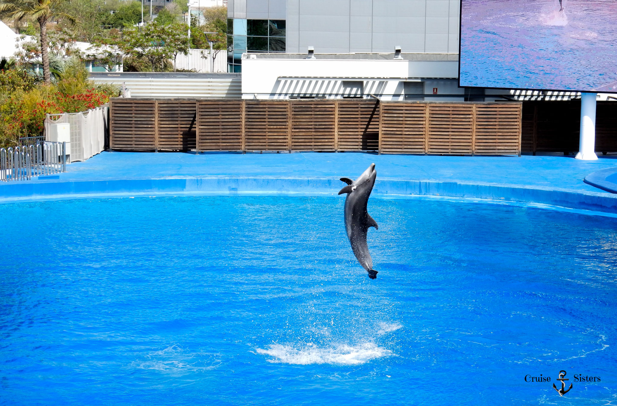 Delfine im Aquarium Oceanografic