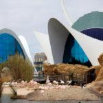 Valencia: Das größte Aquarium Europas