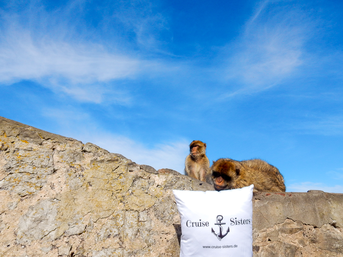 Wild monkeys in Gibraltar and the cruising pillow