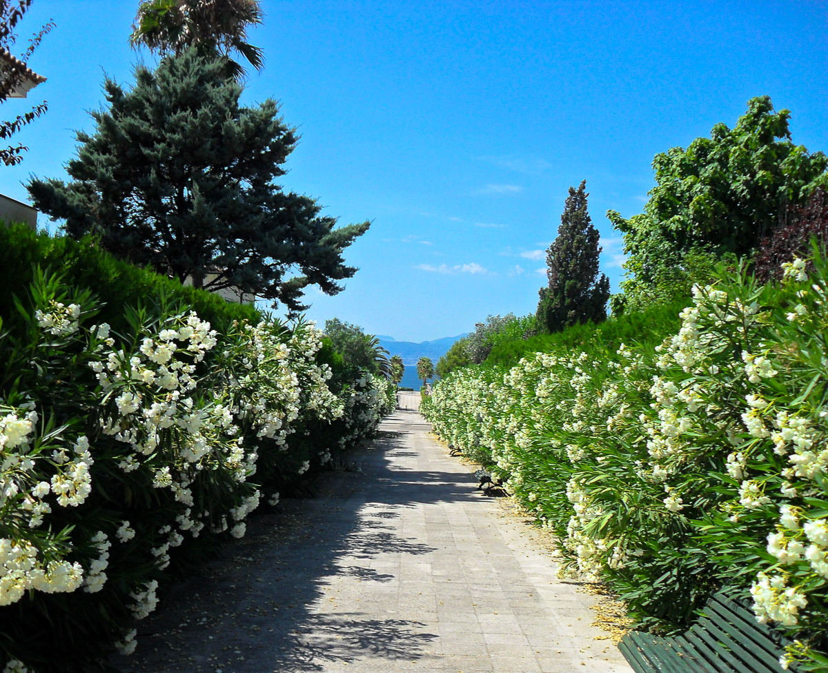 Weg zur Promenade in Son Verí Nou