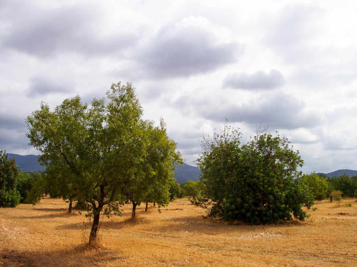 Aussicht auf der Fahrt von Palma nach Sóller